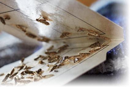 Motten Bekampfen Der Mottenexperte Zeigt Wie